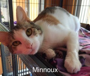 Minnoux