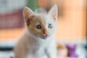 White kitty 3