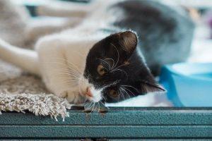 White kitty 5