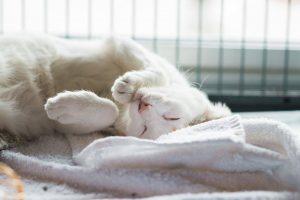 White kitty1