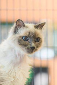 White kitty10