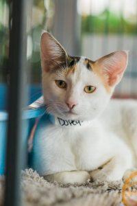 White kitty2