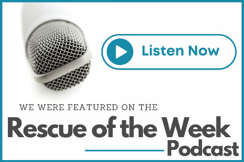 Pet of the week podcast